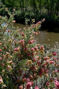 5980 Sierra Vista Carson River